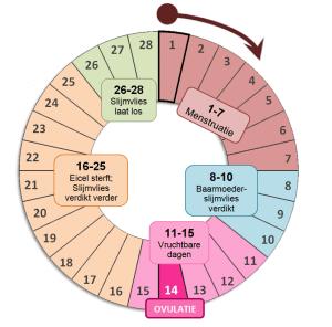 menstruatiecyclus7